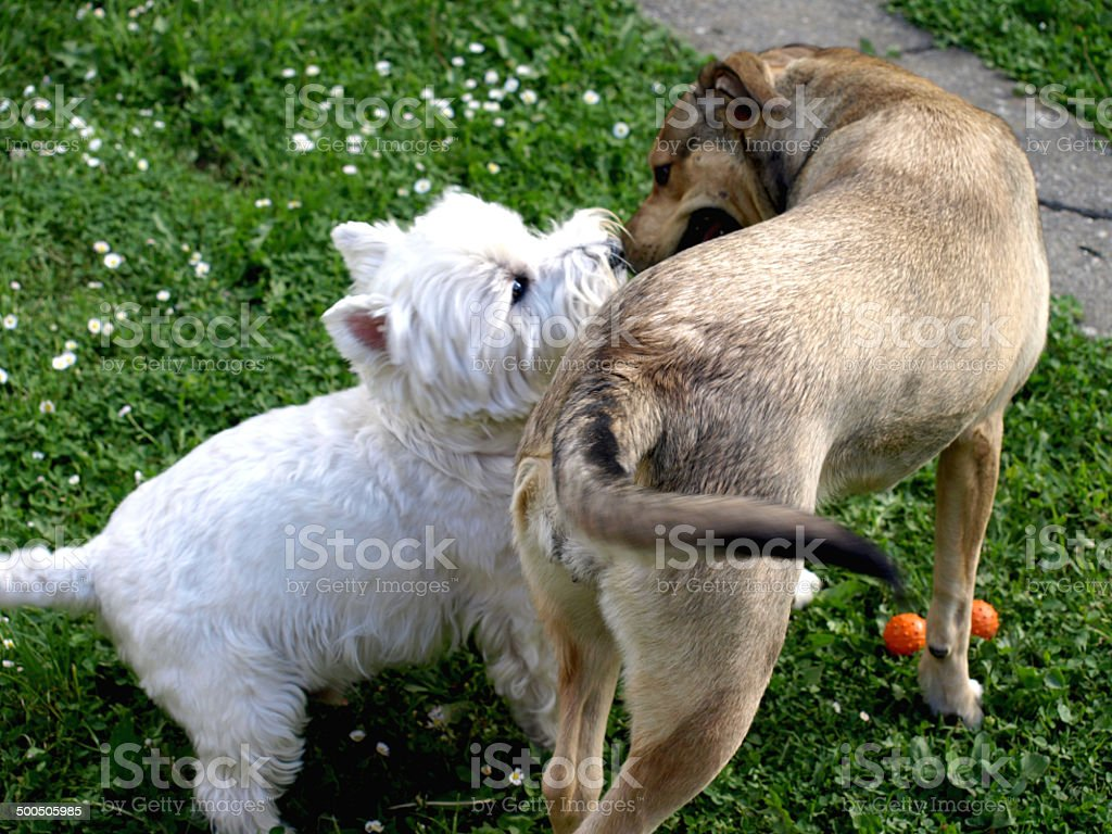 friends dogs kissing stock photo