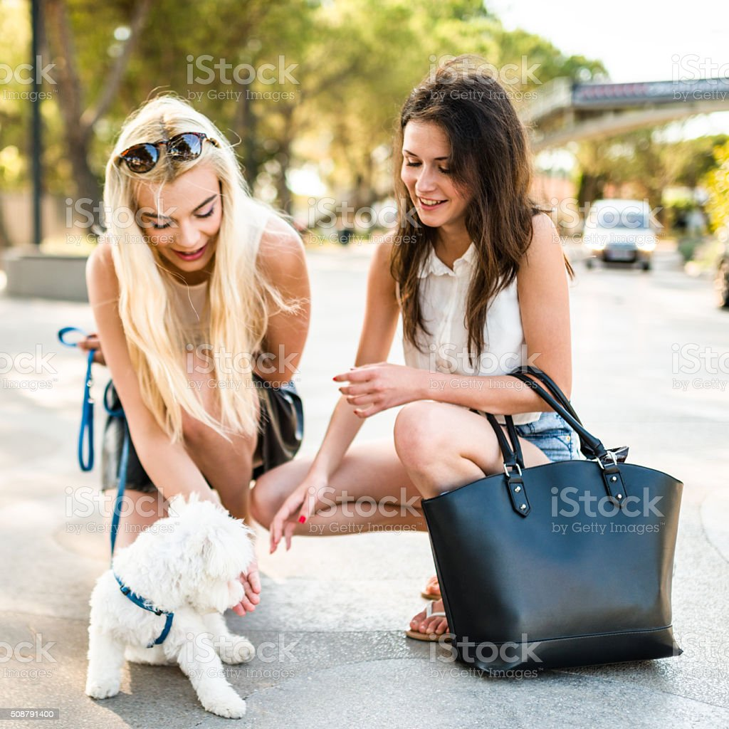 friends enjoy and feeding the dog stock photo
