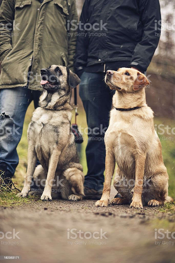 Friends in park with their dogs royalty-free stock photo