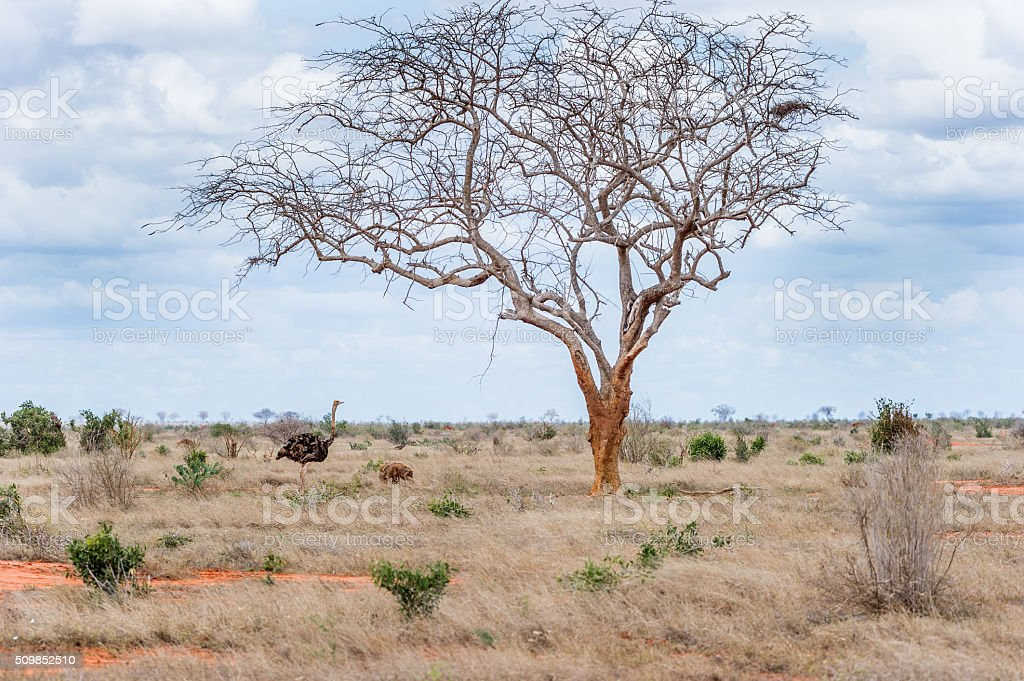 Freunde in der Steppe stock photo