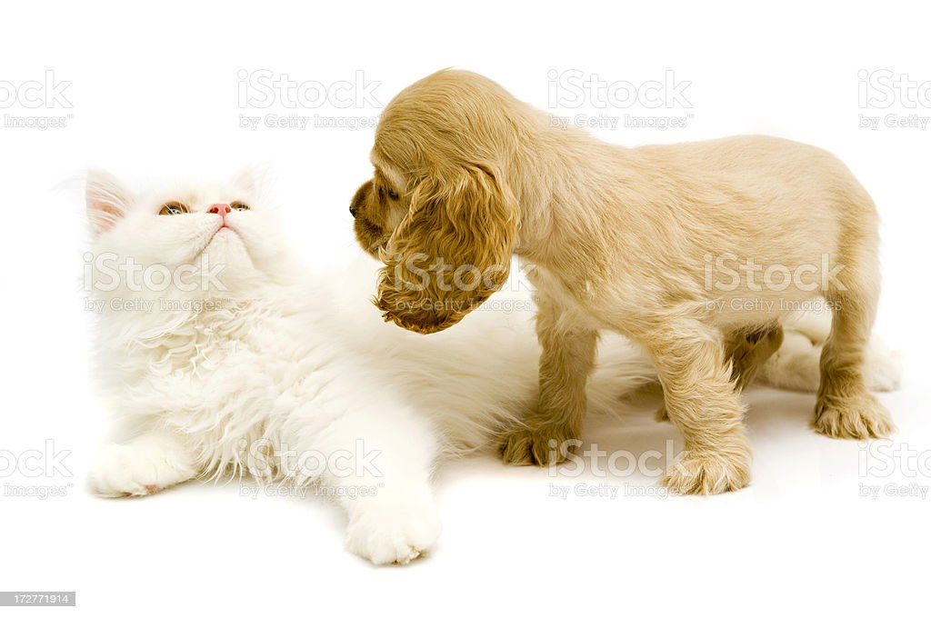friends, royalty-free stock photo