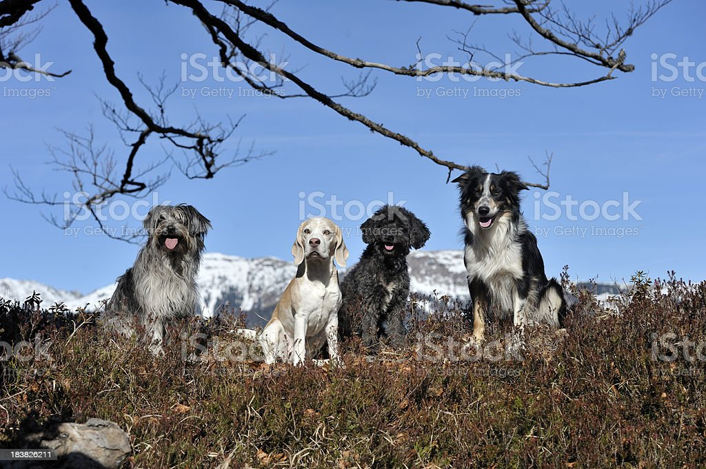 Friends royalty-free stock photo
