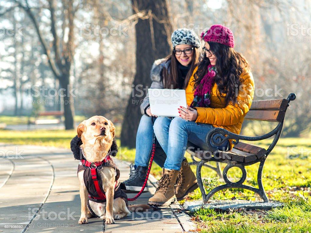Friends using netbook stock photo