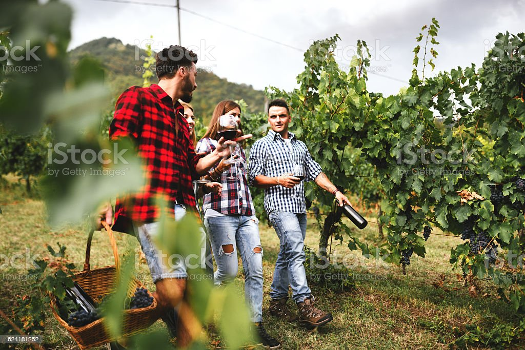 friends walking in the vineyard for picnic stock photo
