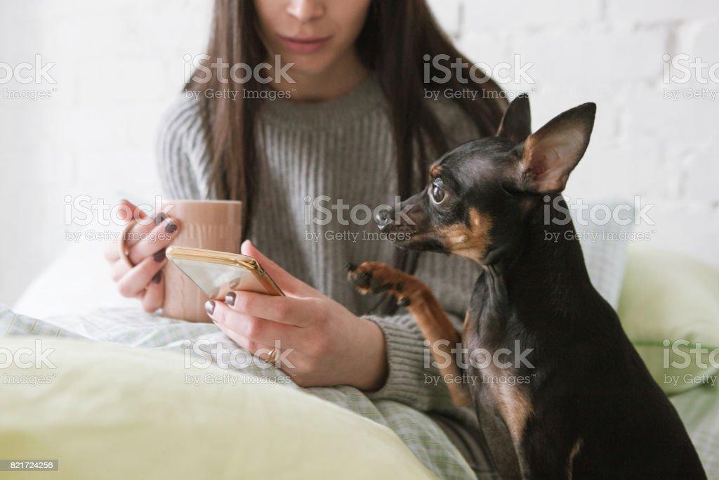 Friendship among human and dog stock photo