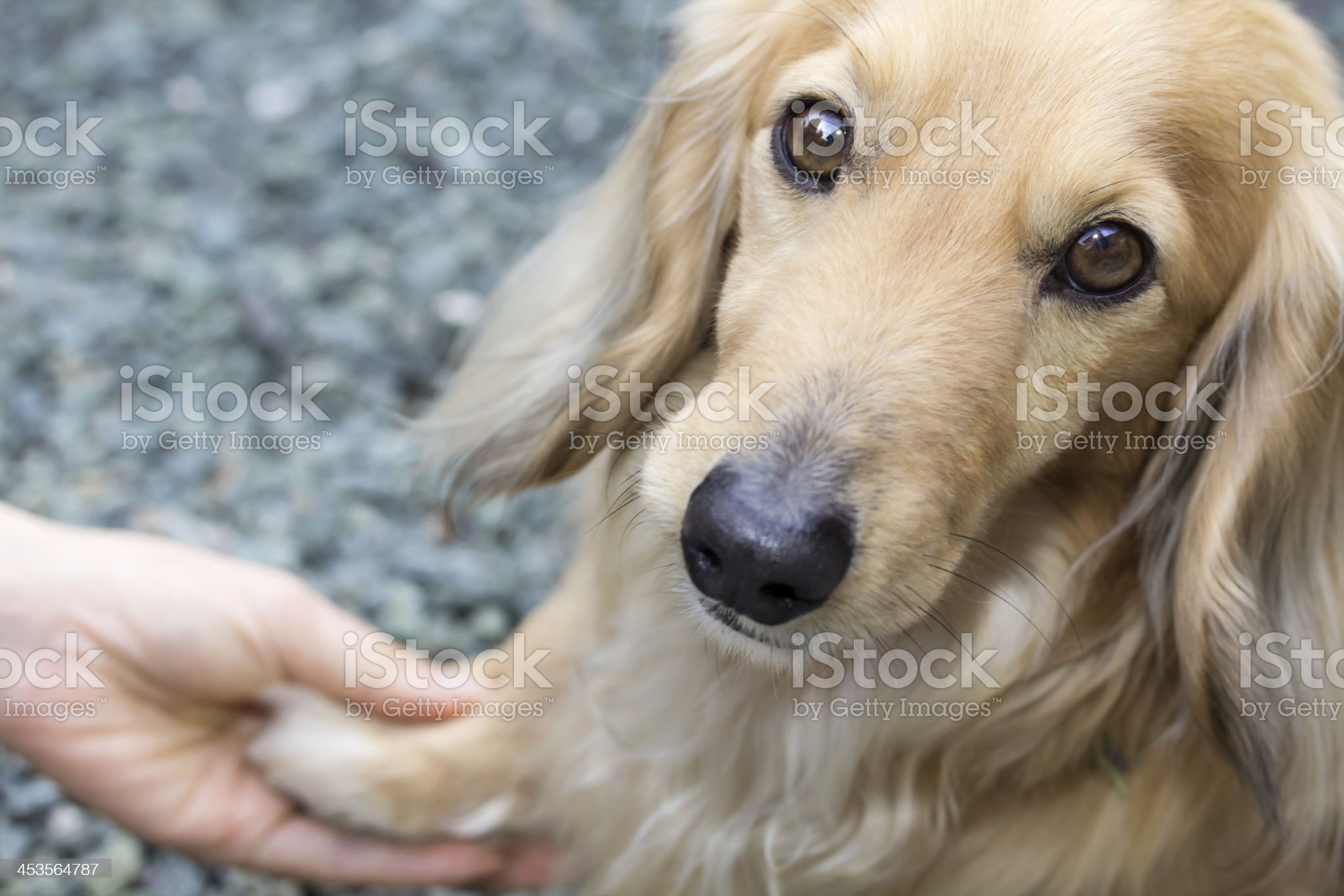 Friendship between human and dog royalty-free stock photo
