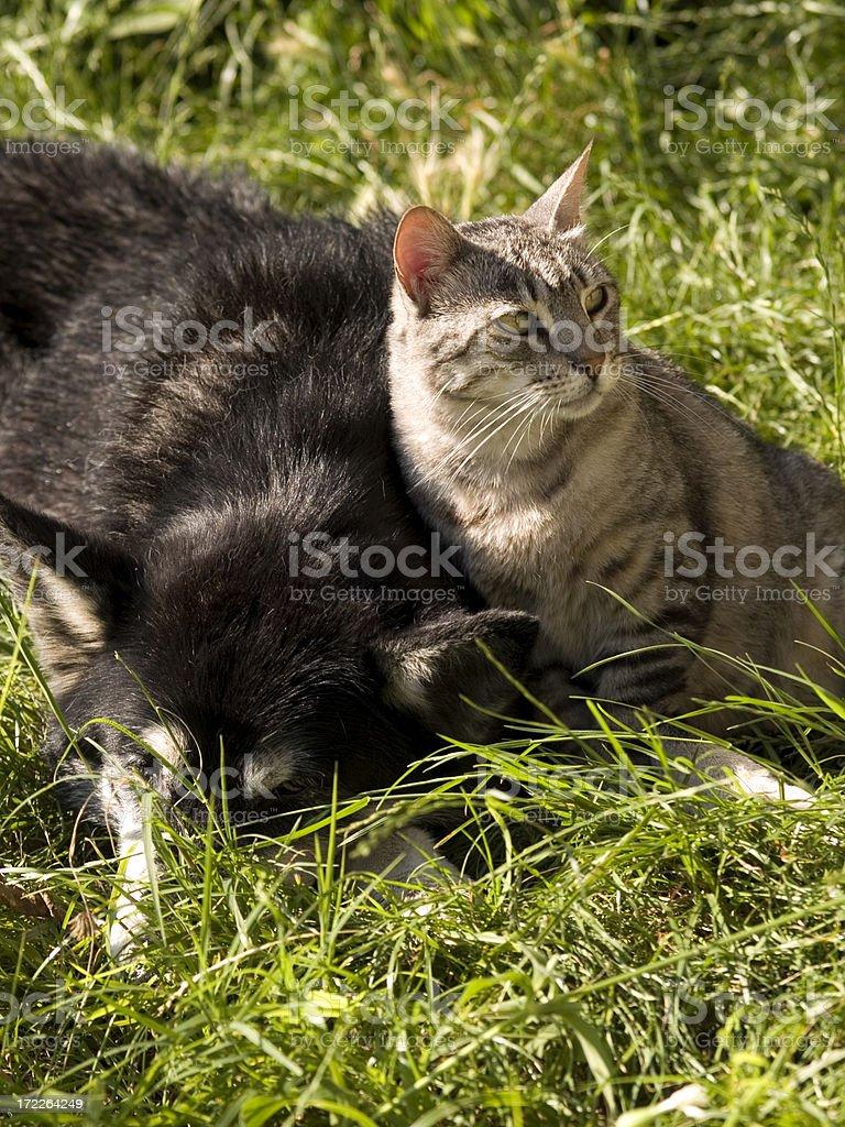 Friendship... stock photo