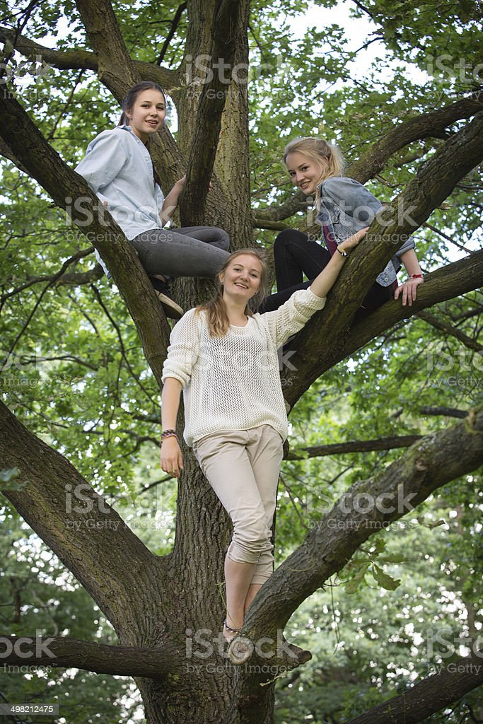 friendship: three teenage girls sitting together in a tree royalty-free stock photo