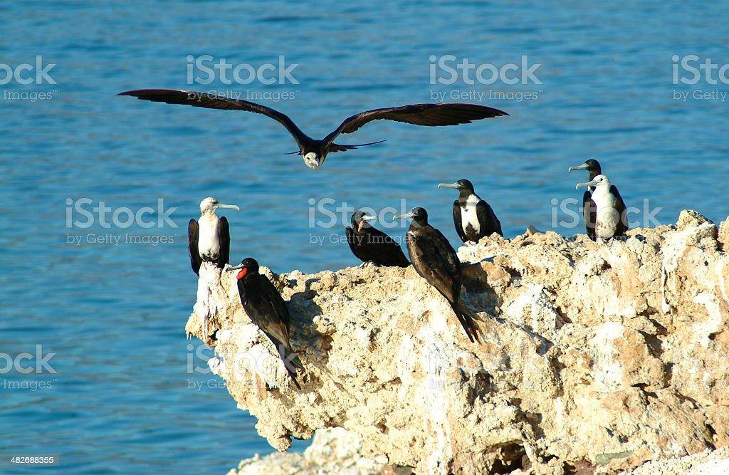 Frigate Rock stock photo