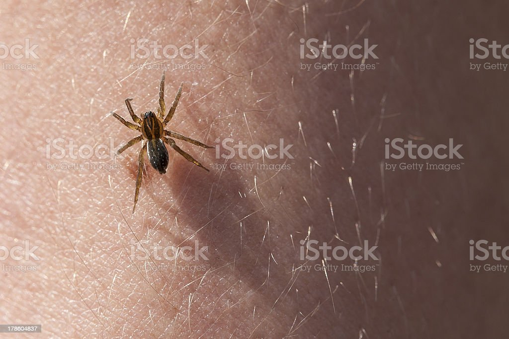 Frightening spider on the skin of hands. stock photo