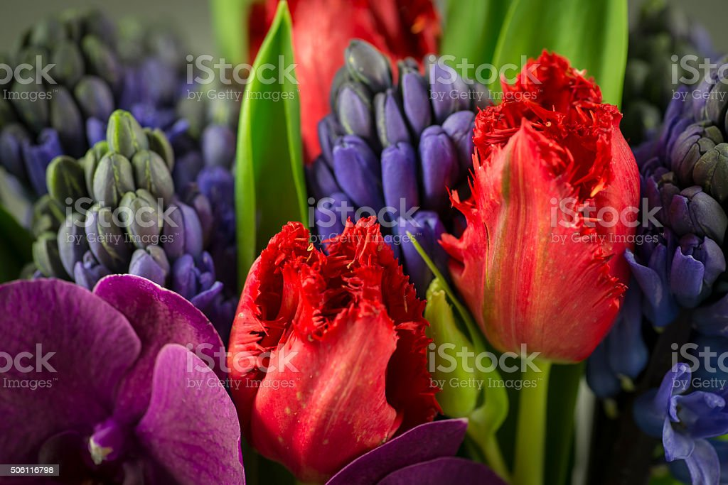 Frilly Tulip stock photo