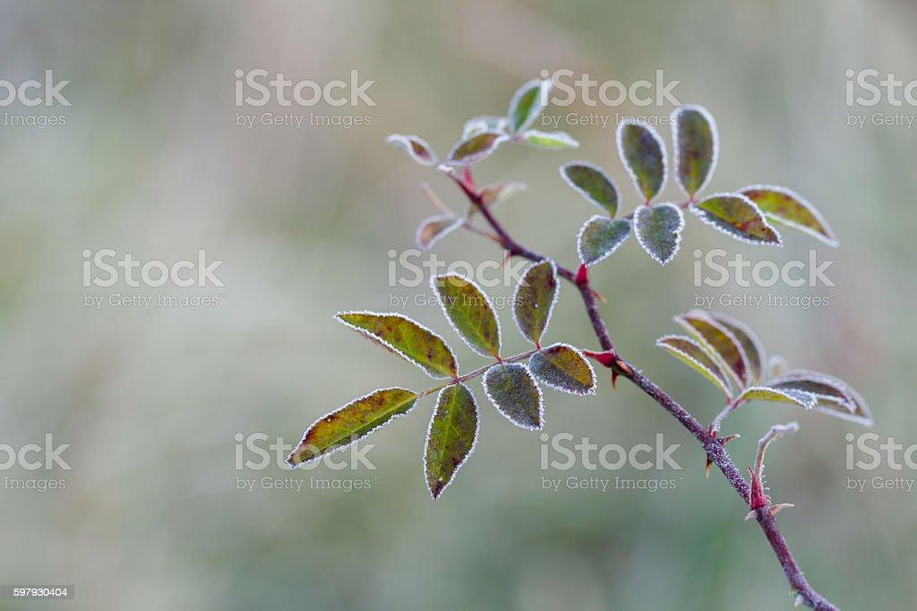 Fringe of frost stock photo