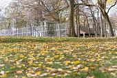 Frisbee golf basket in park during autumn
