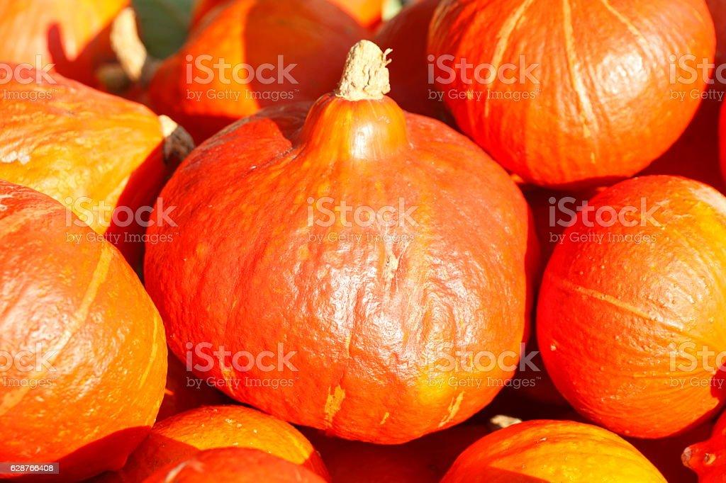 Frische orange Hokkaido-Kürbisse auf einem Marktstand stock photo