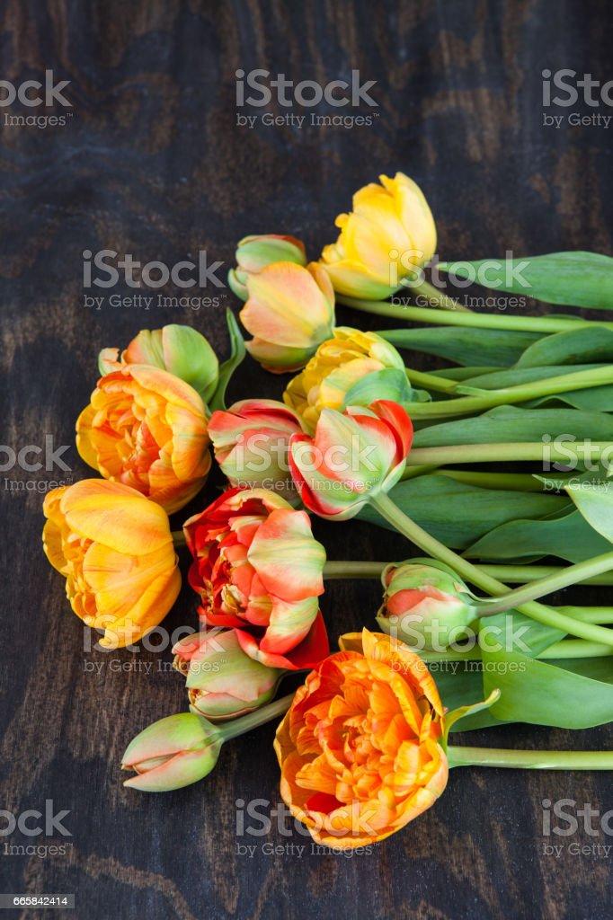 Frische Tulpen in leuchtenden Farben stock photo