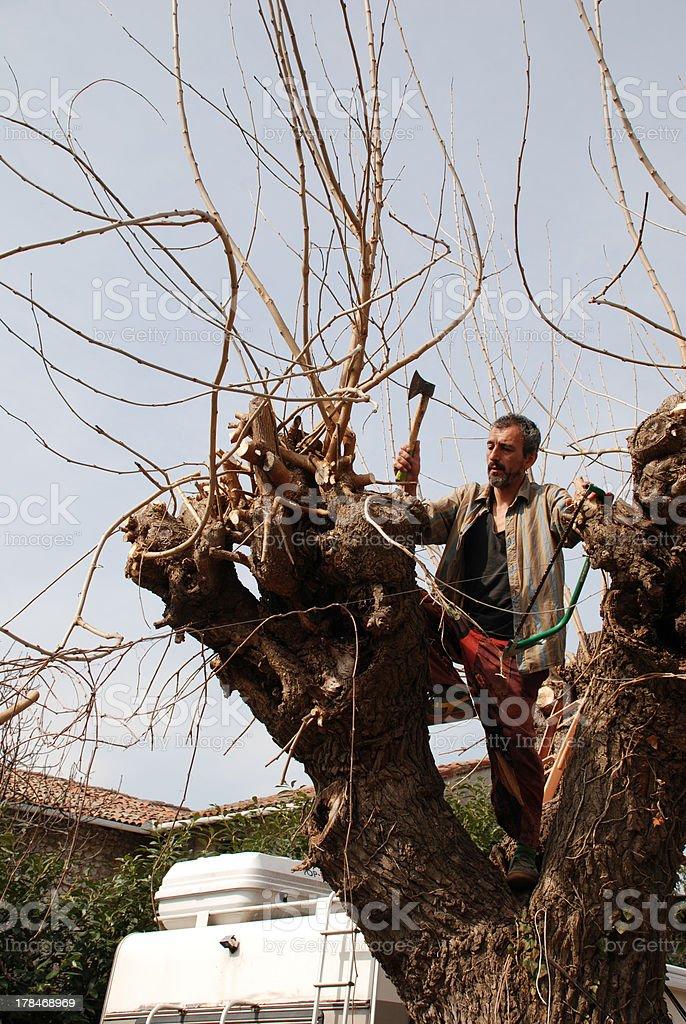 Friulian Farmer Axing Tree royalty-free stock photo