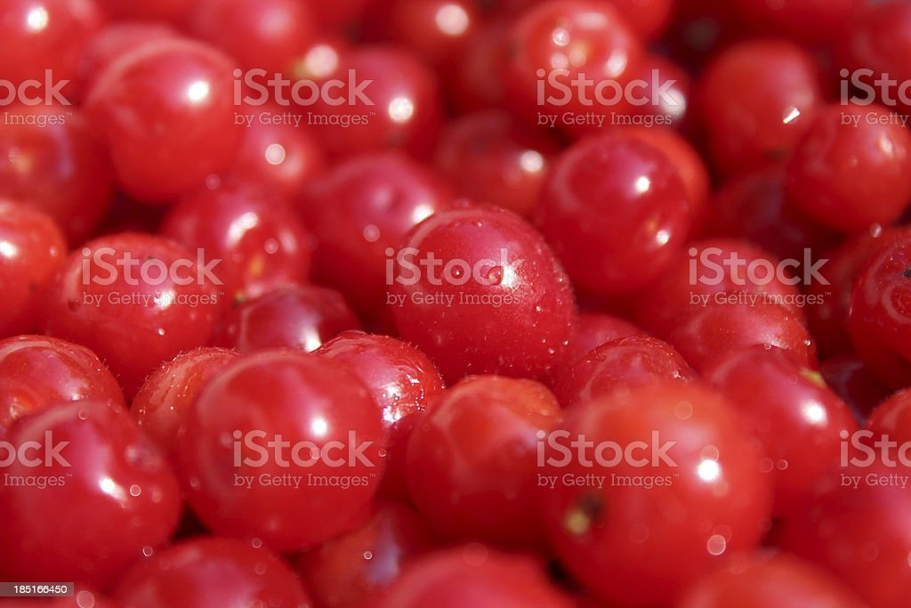 friuts of red berries Prunus tomentosa royalty-free stock photo