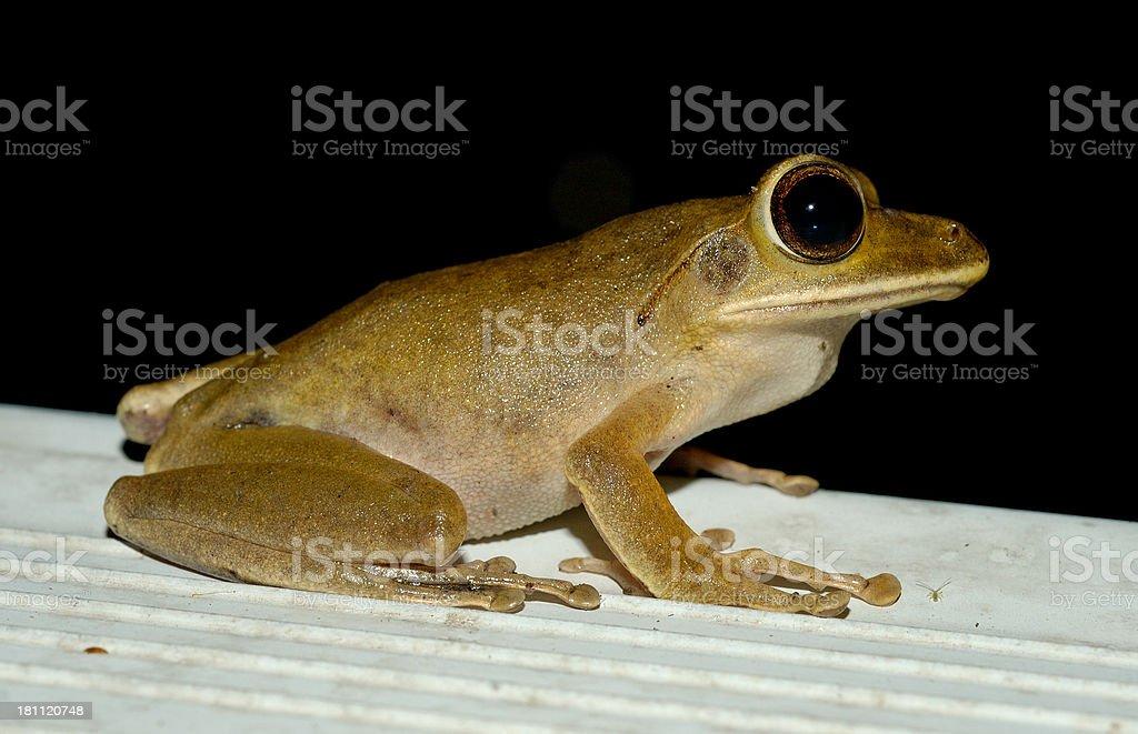 Frog and Arachnid royalty-free stock photo