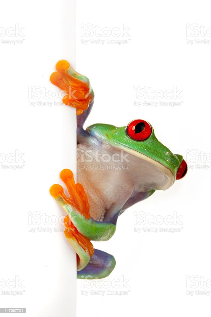 Frog and blank sign stock photo