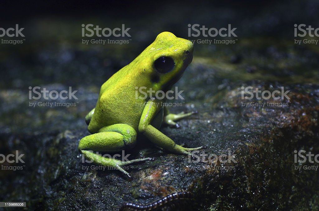 frog and worm royalty-free stock photo