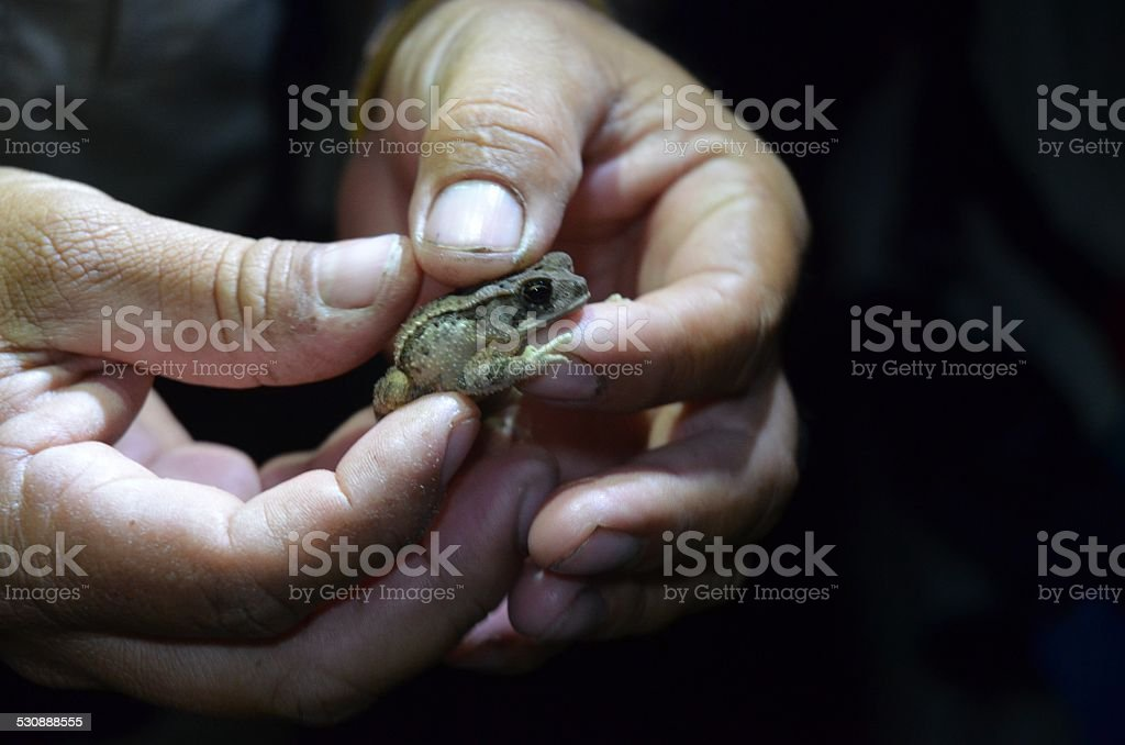 Frog Being Held royalty-free stock photo