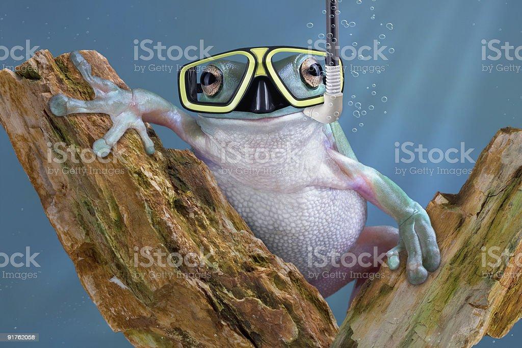 Frog Diver Underwater stock photo