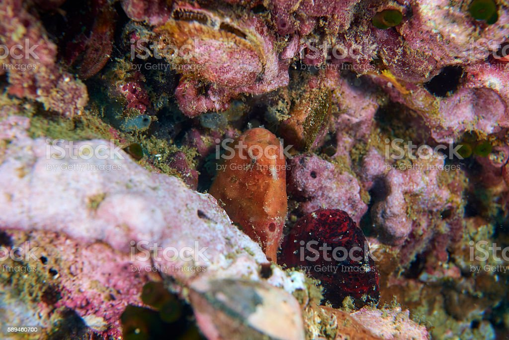 frog fish stock photo