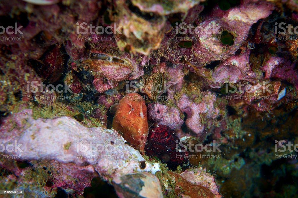 frog fish stock photo
