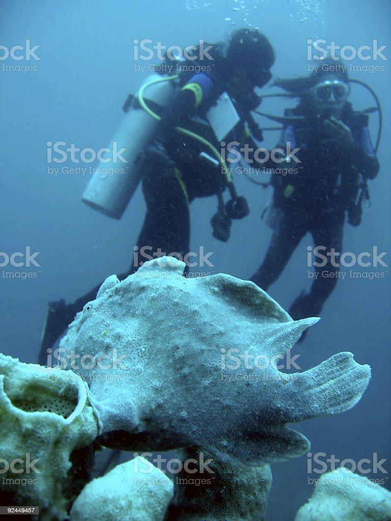 frog fish scuba divers stock photo