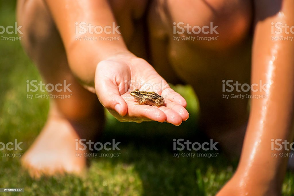 Frog in hand stock photo