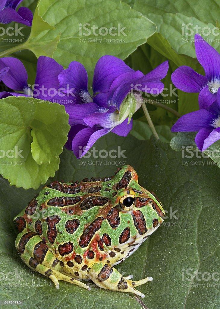Frog in spring stock photo