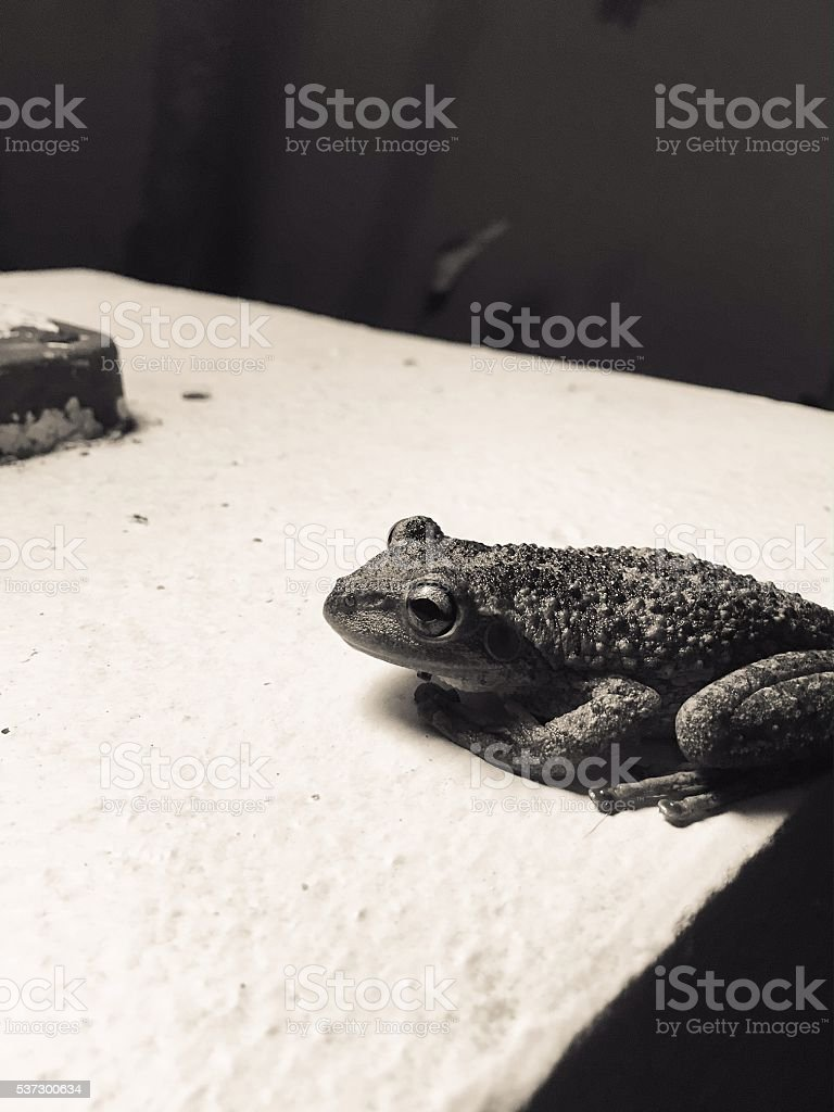 frog in the night stock photo