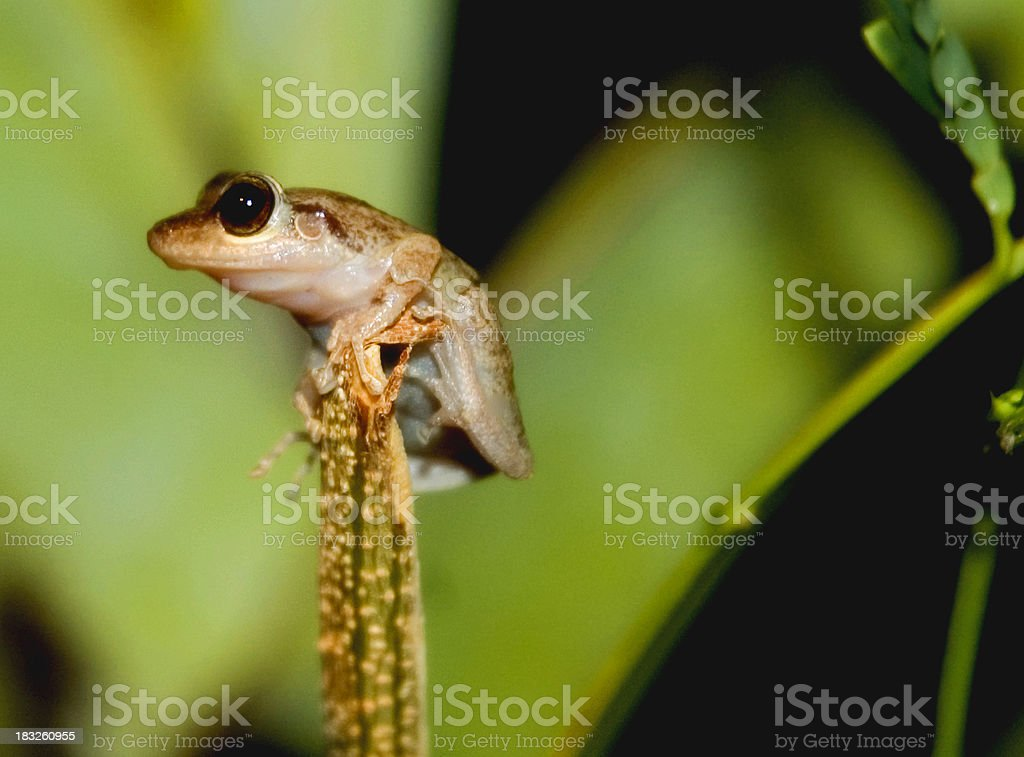 Frog in the Rainforest stock photo