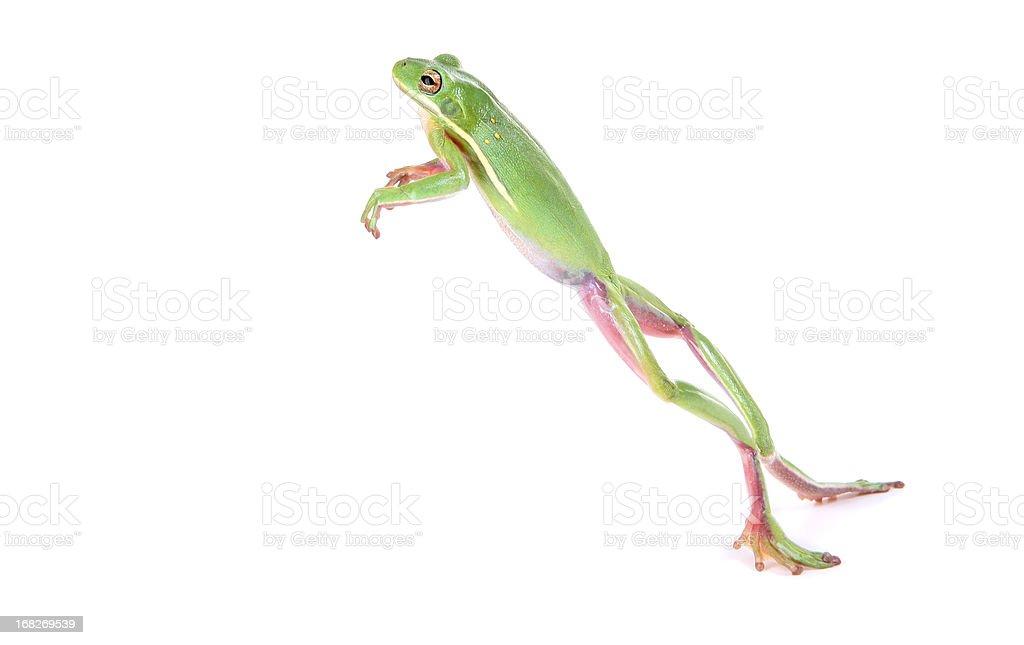 Frog Jumping stock photo
