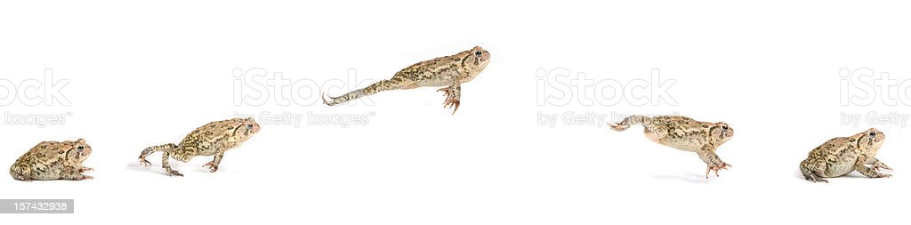 Frog Jumping Sequence stock photo