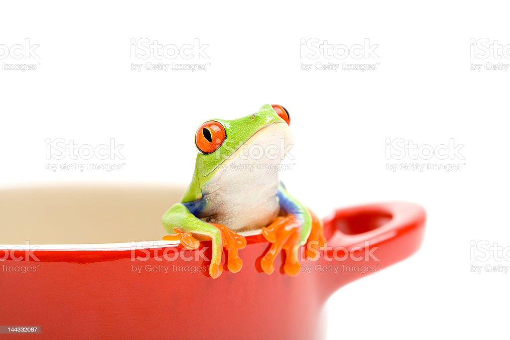 frog looking out of cooking pot stock photo