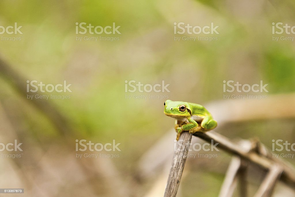 Frog on a branch stock photo