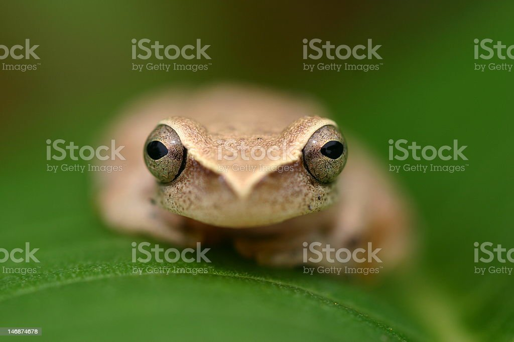 Frog on a leaf stock photo