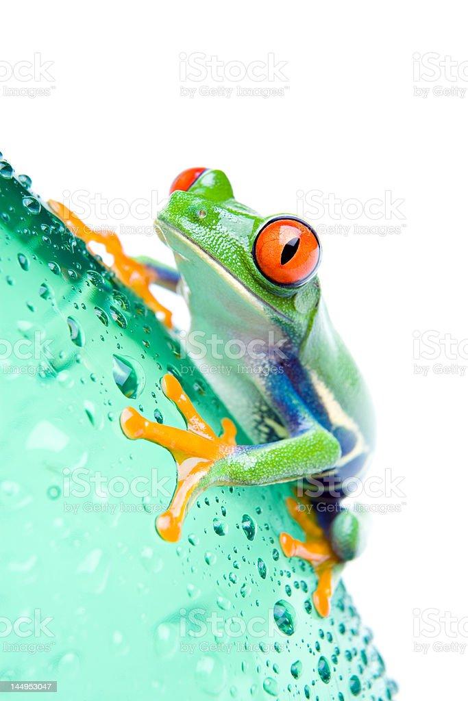 frog on bottle isolated white royalty-free stock photo