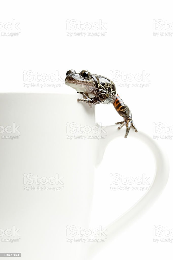 frog on coffee cup royalty-free stock photo