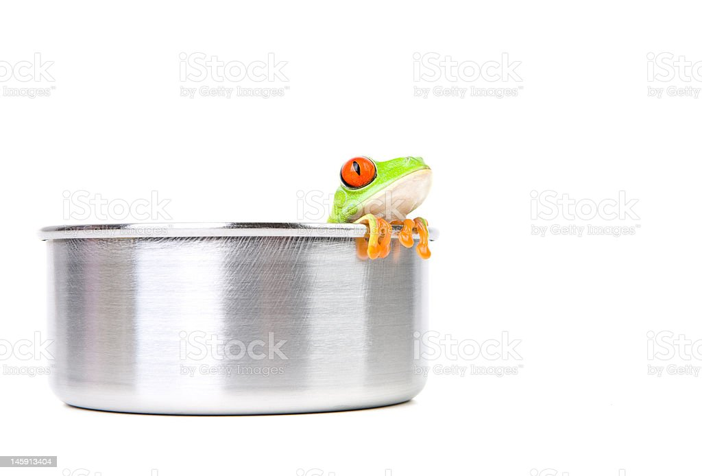 frog on cooking pot stock photo