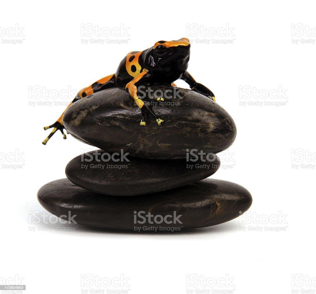 Frog on Lava Stones. royalty-free stock photo