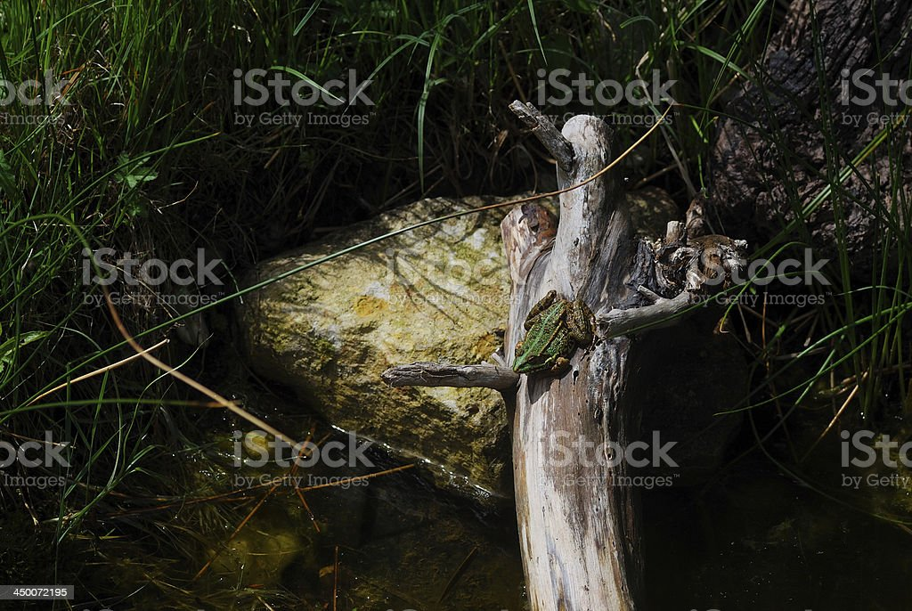 frog on tree trunk royalty-free stock photo