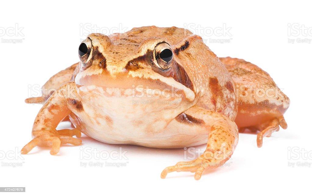 Frog. stock photo