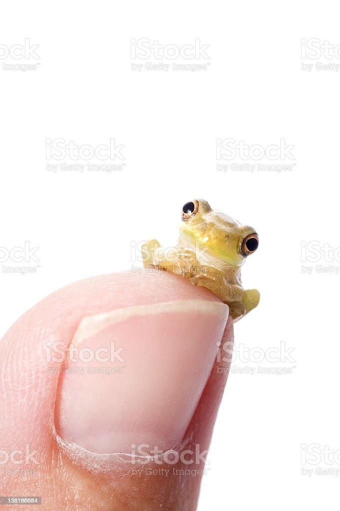 Frog Plotting World Domination stock photo