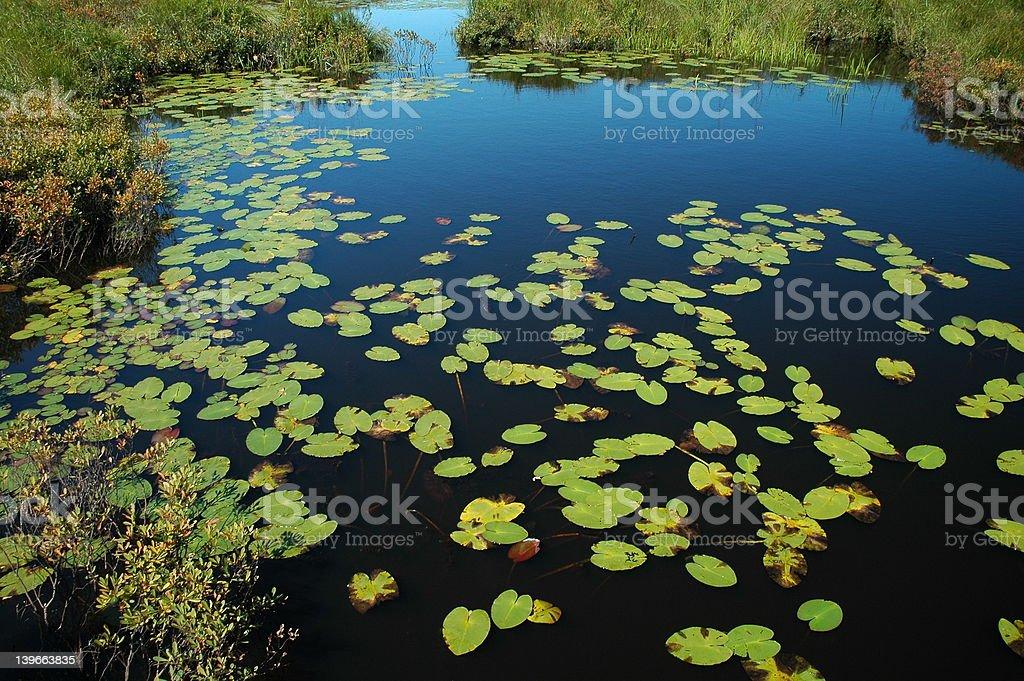 Frog Pond royalty-free stock photo