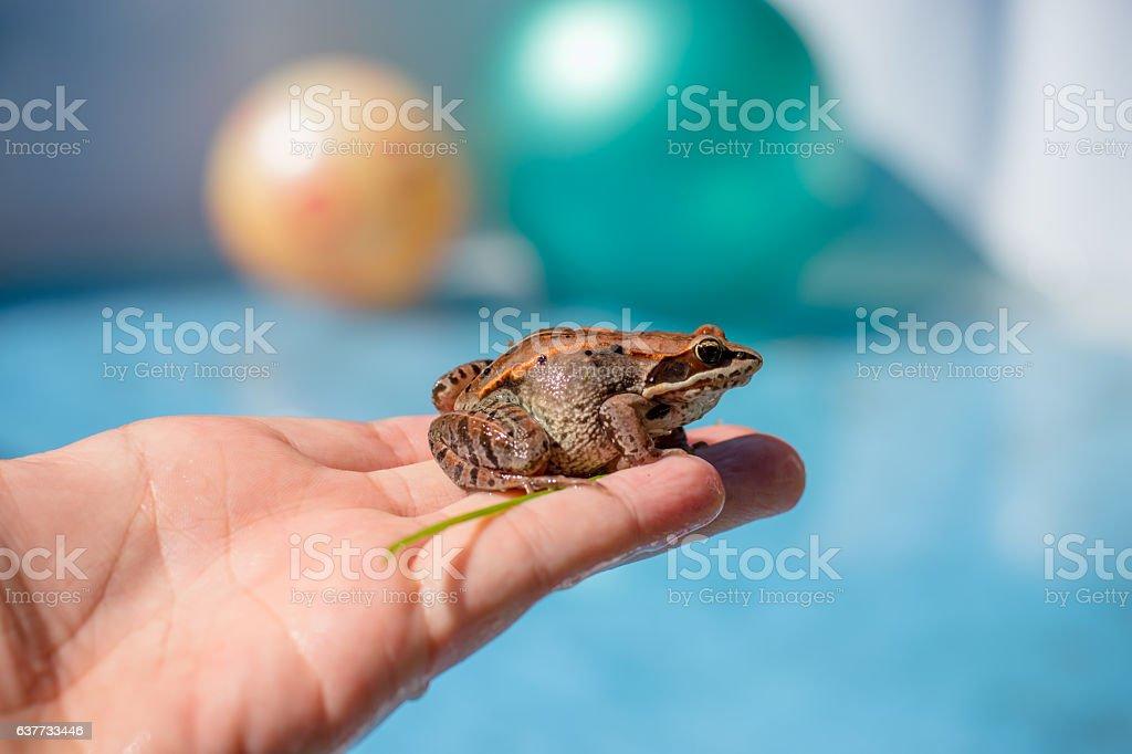 frog pool stock photo