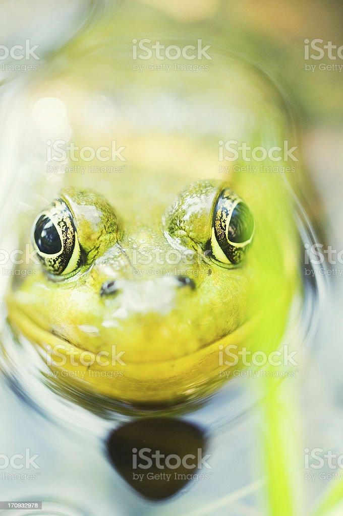 Frog Portrait stock photo
