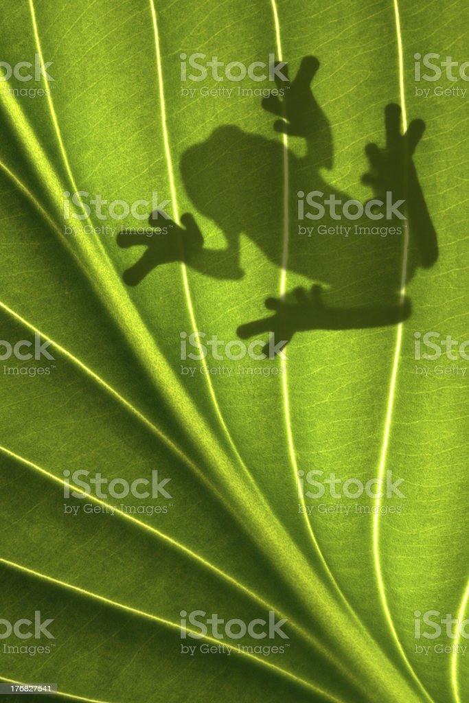 Frog Shadow stock photo