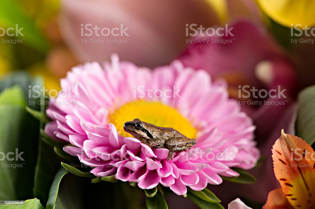 Frog Sitting On A Flower stock photo